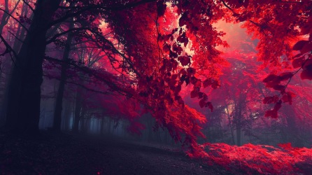 red-forest-trees-5_www.FullHDWpp.com_
